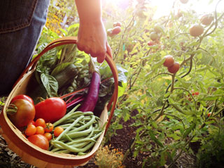 Local and organic food jobs | FoodWork.ca