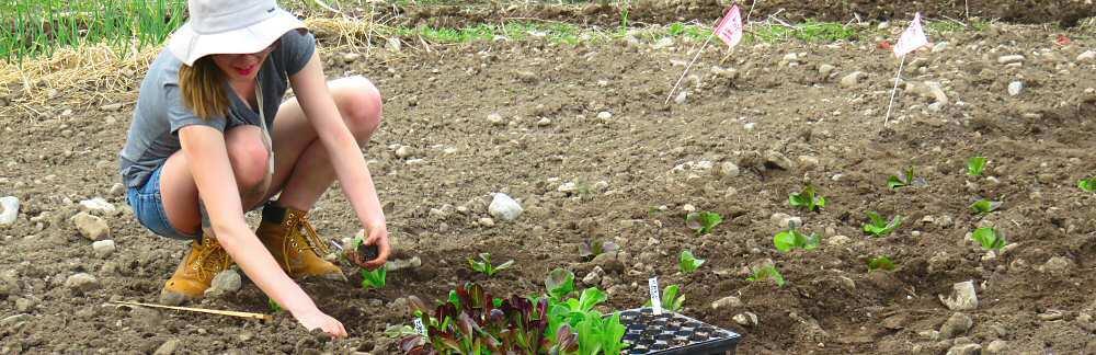 Job: Organic veggie farming, Sep–Nov, part-time